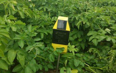 FieldControl wspomaga uprawę ziemniaka