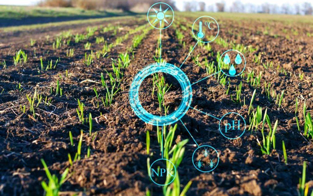 Optymalizacja nawożenia fosforem